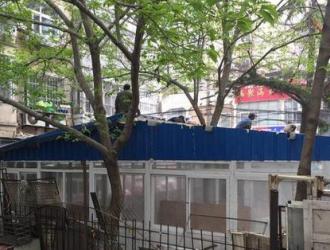 青岛拆除占用绿地的违法仓库